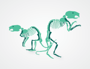 Illustration of two rat skeletons